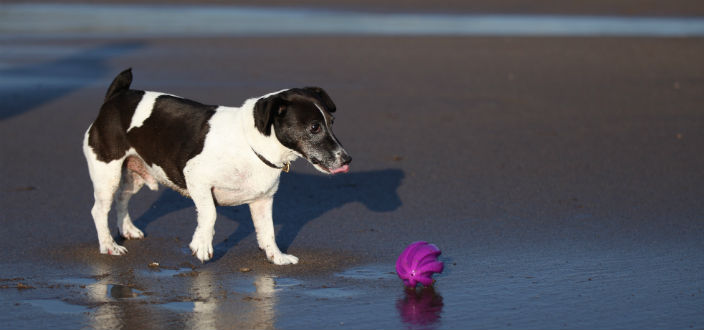 From Easter Day the rules on access for dogs on Cornish beaches change…