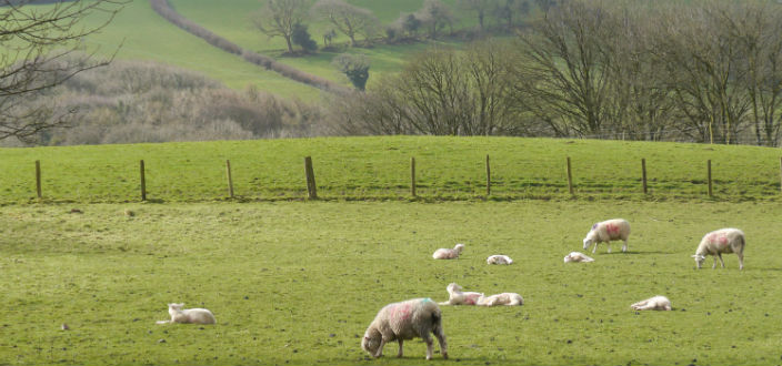 You are currently viewing Farmer Jez Gets Ready for Easter Lambing
