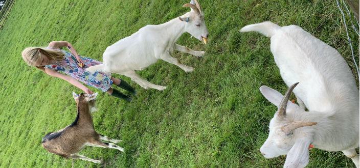 Three Billy Goats not so Gruff