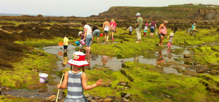 Coombe Farm's Guide to Cornish Rock-Pooling